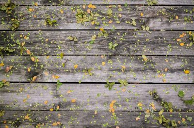 leaves spread across a wood construction