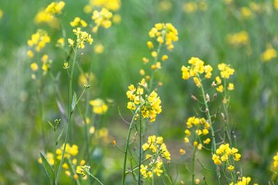 Mustard image in a blog by writer Brian McGee