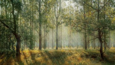 Image of a forest in an interview by Brian McGee